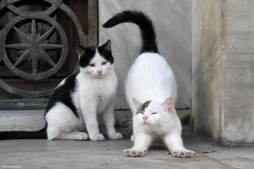 Chats Istanbul