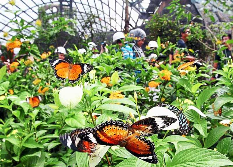 penang-butterfly-farm