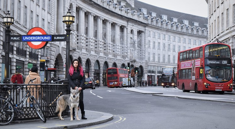 Dog Adventures of Wolf City, Londres