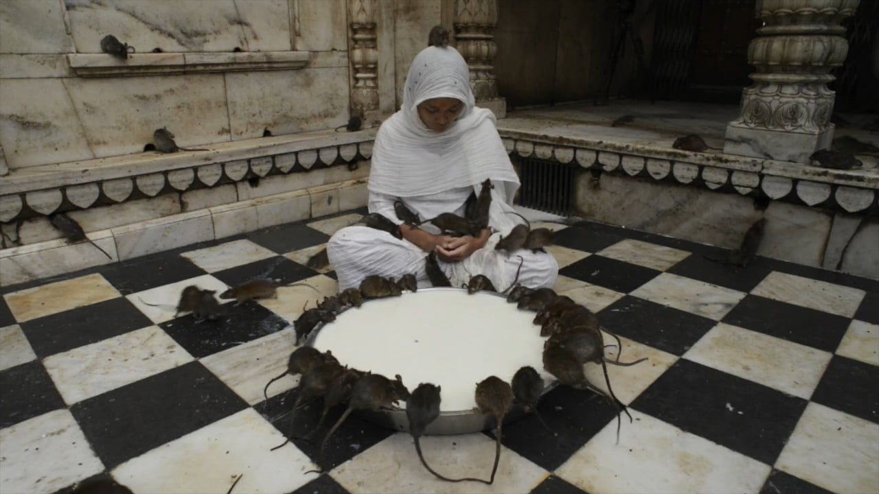 temple rats hindou inde india