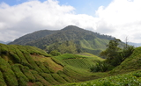 Malaysie - Cameron highlands