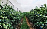 fruit picking ferme australie whv working holiday visa job economie immigration