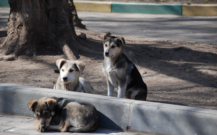 dog_pet_pets_dogs_animal_animals_moscow_straydogs-280250.jpg!d