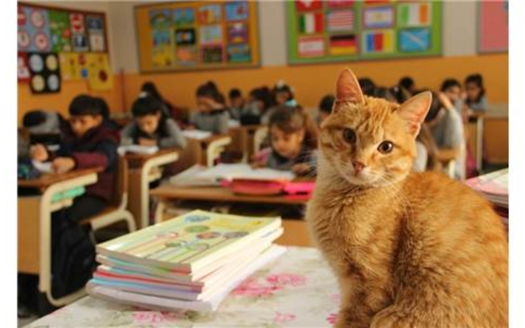 chat mascotte école istanbul turquie