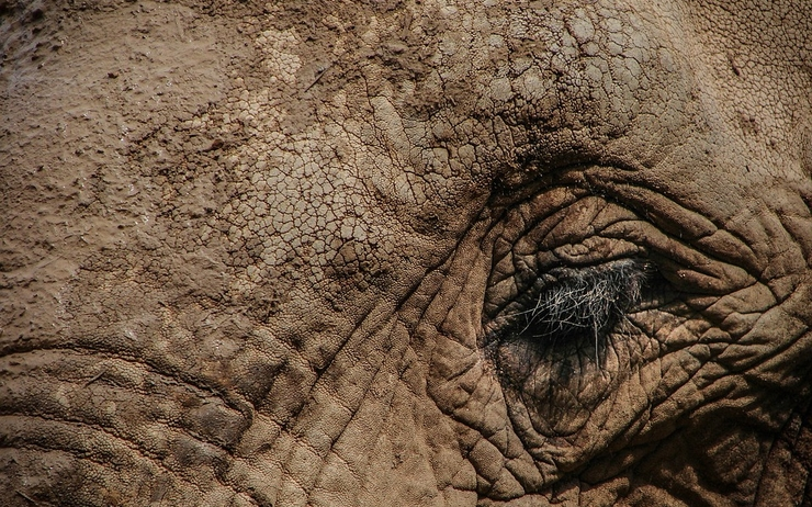 Nature-Wild-Elephant-Animal-Big-Eye-Wildlife-1427427