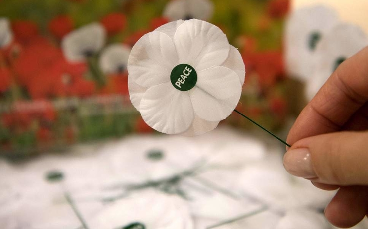 Withe poppy - remembrance day - london
