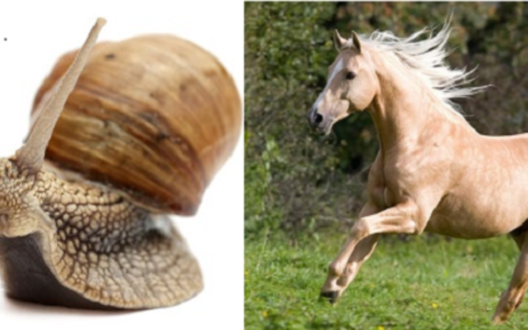 Escargot Cheval Fable Birmanie
